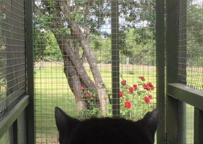 cattery - bedroom view